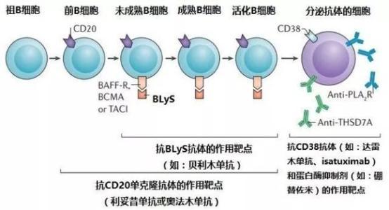 乙型病毒性肝炎治疗常用的几种治疗方法