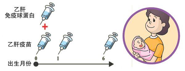 乙肝患者怎样做好母婴阻断?
